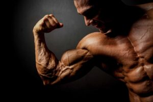 Muscle Peptides